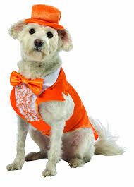 dumb and dumber costumes rasta imposta dumb and dumber lloyd orange tuxedo dog