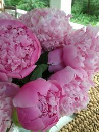 peony arrangement beautiful peony arrangement is made with