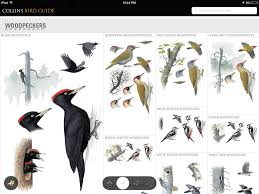 birding apps prairie birder pics with excellent backyard bird