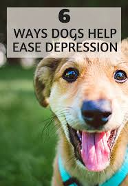 best 25 therapy dogs ideas on pinterest therapy dog training