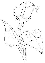 coloriage fleurs et plantes arums à colorier allofamille