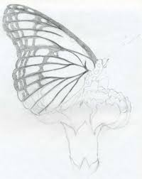 simple drawing sketches butterfly pencil drawings drawing art