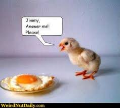 Egg Meme - funny pictures weirdnutdaily fried chick