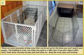 crate training potty training your puppy valor goldens