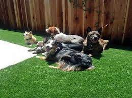 Synthetic Turf Ravensdale Washington Grass For Dogs Backyard Ideas