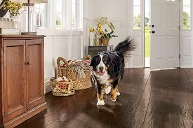 Best Flooring For Pets How To Choose The Best Engineered Hardwood Floor