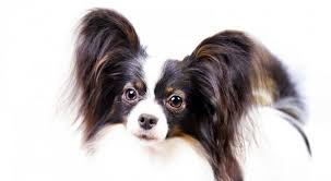 10 best small breeds for owners the pet