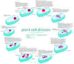 Cell Membrane Worksheet Uncategorized Cell Cycle Labeling Worksheet Klimttreeoflife