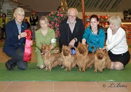 affenpinscher uppf are södermanland kennelklubbs internationella hundutställning 2016