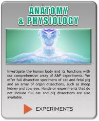 Anatomy And Physiology With Lab Online Course Descriptions For Hands On Learning Science Lab Kits
