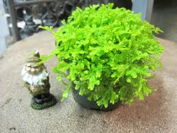 terrarium and miniature garden plants otten bros