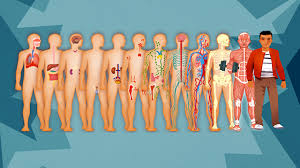 human body systems pictures u2013 hd m com