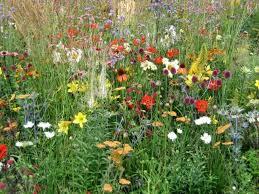 7 best garden borders images on pinterest flower gardening