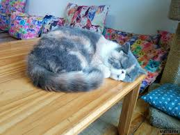 miao cat cafe soft kitty warm kitty little ball of fur