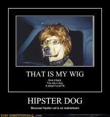 Hipster Dog Meme - trendystyle ruling cats and dogs has funny pet pictures