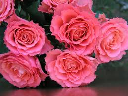 pink and roses beyond the 5 other flower options to gift this s day