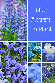 best 25 blue flower names ideas on pinterest blue names blue
