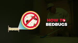 Medicine For Bed Bugs Bed Bug Guide Experts On Bed Bugs And Bed Bug Extermination
