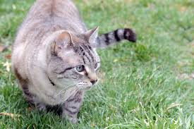 How To Keep Cats Out Of Your Backyard How To Keep Stray Cats Out Of Your Yard Cuteness