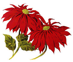 Christmas Flowers Christmas Flowers Clipart Clip Art Library