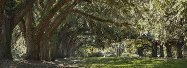 cannon trees inc