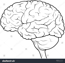 brain anatomy coloring book side view line drawing human brain stock illustration 383137780