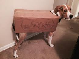 troll for halloween decided my dog would be a box troll for halloween this year olive