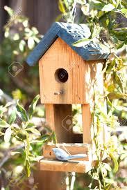 cool bird house plans window bird feeder amazon full image for superb cool bird feeder