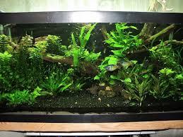 Substrate Aquascape 38 Best Aquarium Images On Pinterest Aquarium Planted Aquarium
