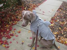 in costumes weimaraner costume it takes all kinds a by