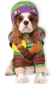 63 best halloween dog costumes and more images on pinterest pet