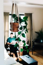 apartment plants gardening in a really tiny apartment eco warrior princess