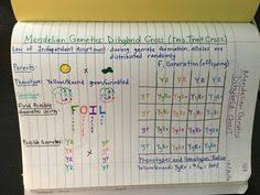 genetics unit edpuzzle videos amoeba sisters foil method gif
