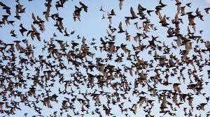 amazing bats of bracken crave