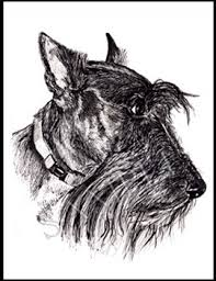 scottish terrier cards animal by grimes
