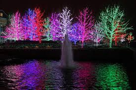 tree light display rainforest islands ferry