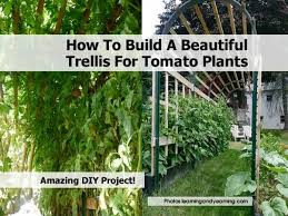 Trellis Vegetable Garden by How To Build A Beautiful Trellis For Tomato Plants