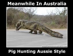 Australia Meme - meanwhile in australia album on imgur