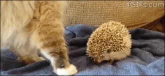 Stupid Cat Meme - stupid cat y so serious