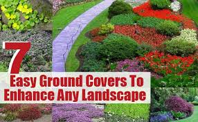 Backyard Ground Cover Ideas Garden Design Garden Design With Startling Landscaping Ideas