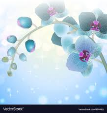 blue orchid flower blue orchid flower on a blurred background vector image