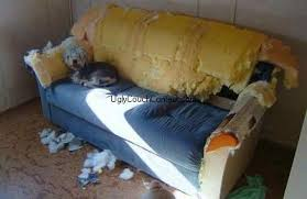 vote for the world u0027s ugliest couch contest 2009 sponsored by