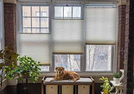 Top Down Bottom Up Cellular Blinds Customer Photo Contest Winners Showcase Blindster Com