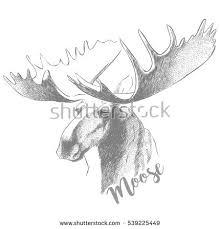 moose head huge antlers sketch vector stock vector 539225449