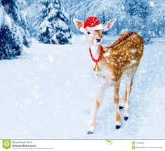 christmas deer christmas deer in winter forest with snow fall stock image image