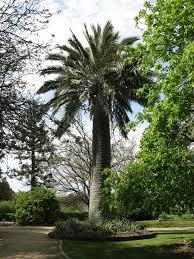 Kyneton Botanical Gardens Mollison Kyneton Mapio Net