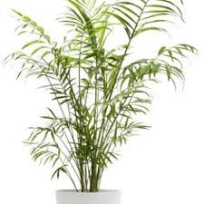 house plants no light 10 best houseplants for low light low lights houseplant and plants