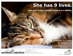 adopt a cat for free at seattle animal shelter this weekend