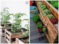 gem se pflanzen balkon gemüse und obst auf dem balkon pflanzen eat smarter