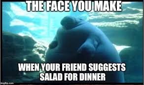 Manatee Meme - fat manatee imgflip